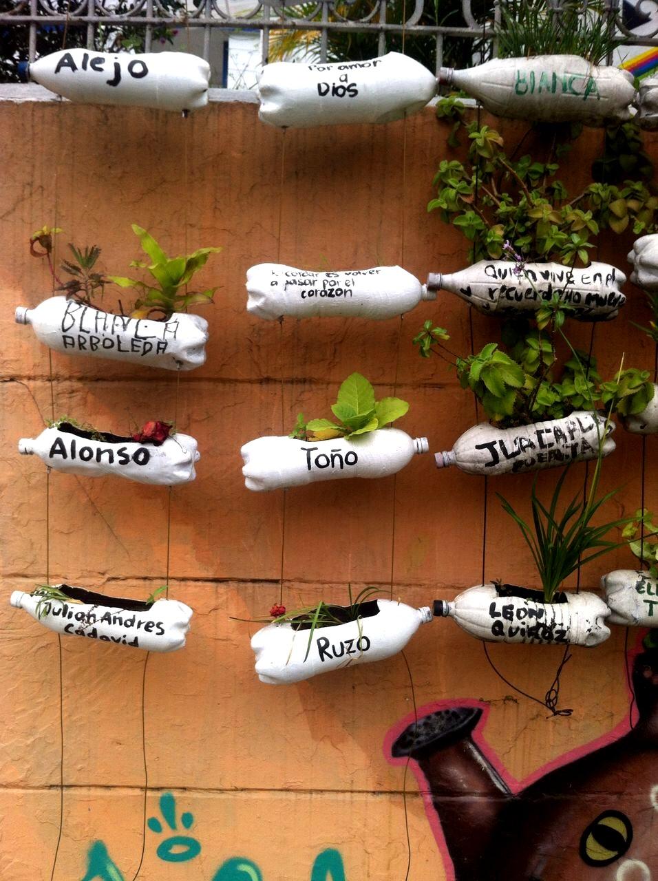 Aquí una muestra del trabajo de Agro Arte, donde adoptan una planta con el nombre de jóvenes o personas asesinadas o desaparecidas en la zona, en su memoria.