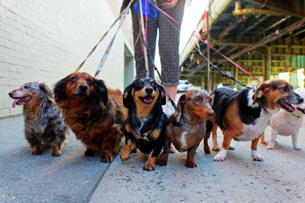 Cali perfila su nuevo Centro de Bienestar Animal