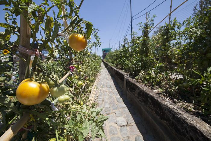 Terrazas De Cultivo Una Alternativa Ecológica Y Alimenticia