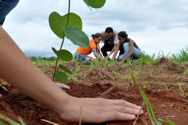 Paraguay Planta se aseguró los primeros mil árboles