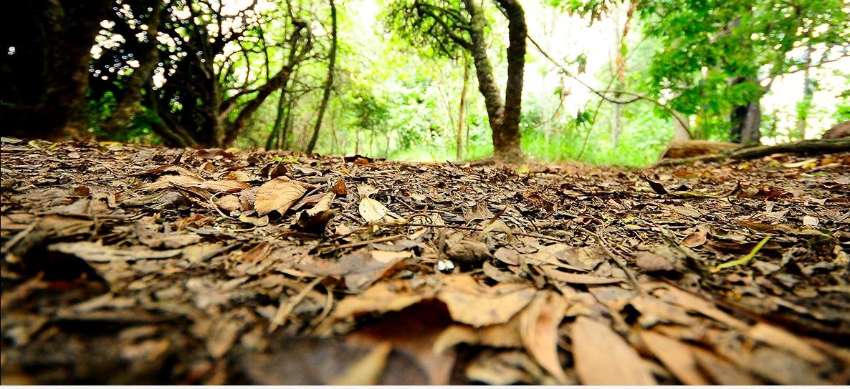 Suba ha perdido 56 % de zonas verdes por urbanización
