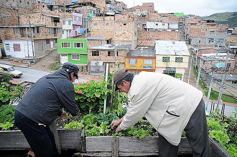 Agricultura urbana en Bogotá, a cargo de las mujeres