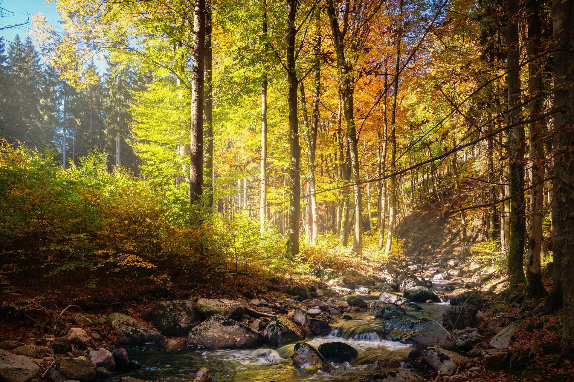 Bosques Y Paisajes Prósperos, Clave Para Alcanzar Los