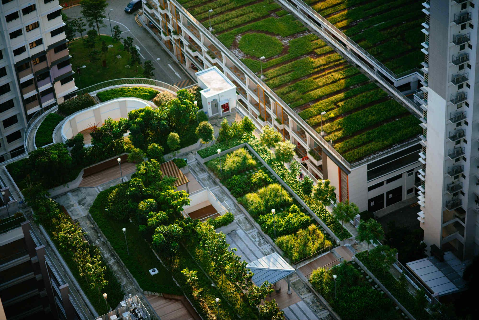 Techos verdes bajan la temperatura en clima tropical