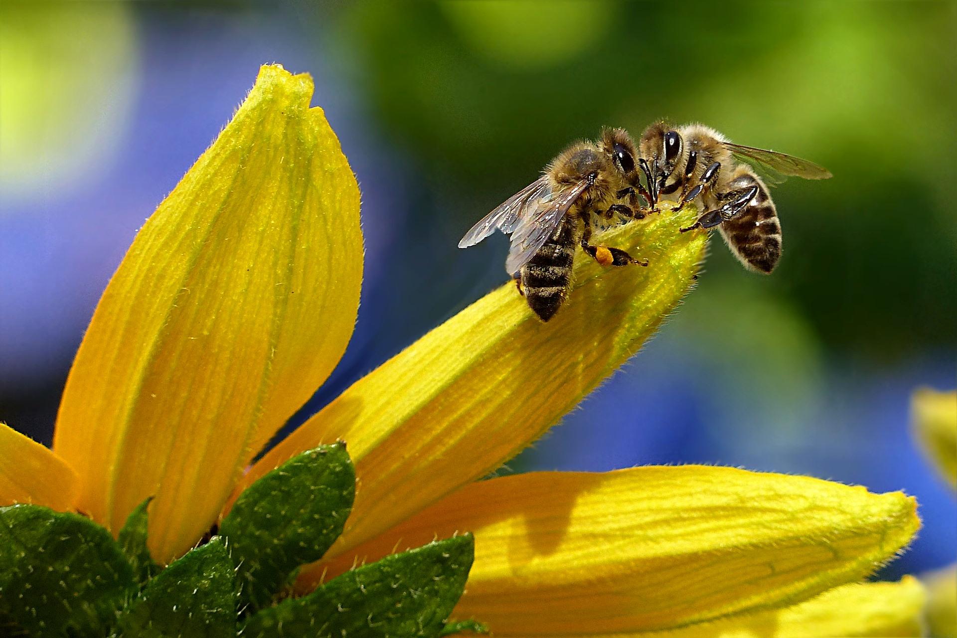 Los plaguicidas y la poca variedad de plantas están matando las abejas
