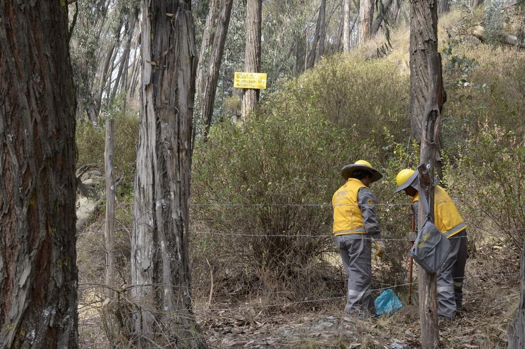 25 mil plantas y árboles serán sembrados en La Paz como compensación
