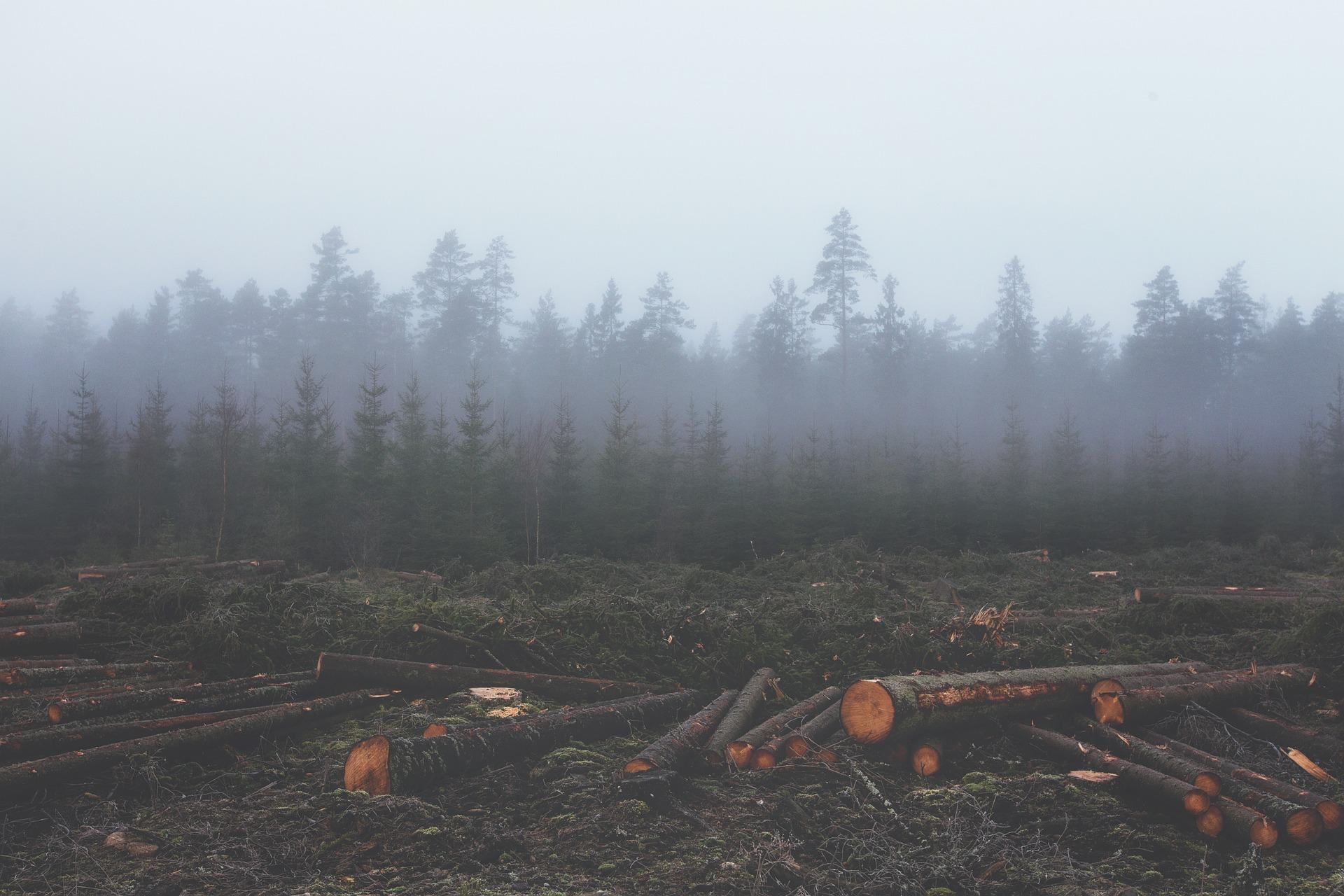 El mundo tiene más leyes ambientales, pero no se cumplen