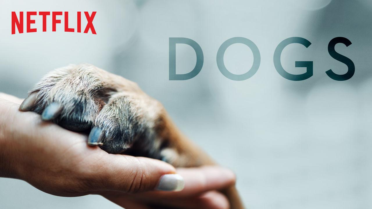 Dogs: mascotas que son ya nuestra familia
