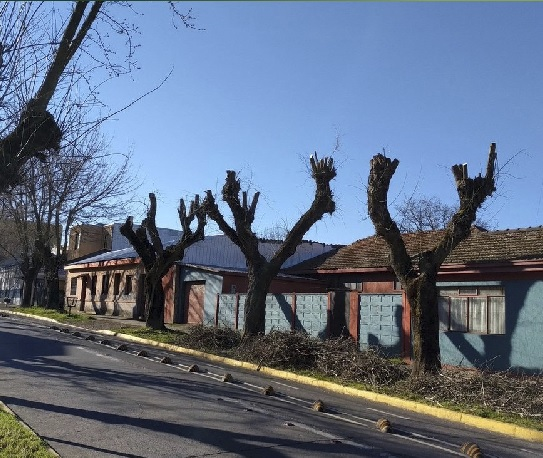 En Chile los árboles tienen una defensa en Red