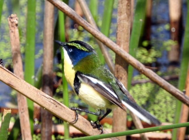 Coquimbo recibió el primer kit de observación de aves