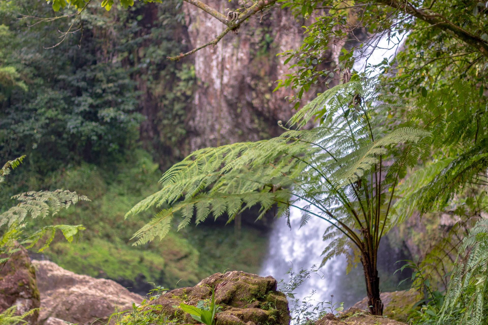Biodiversidad: ¿el otro lado de la moneda?