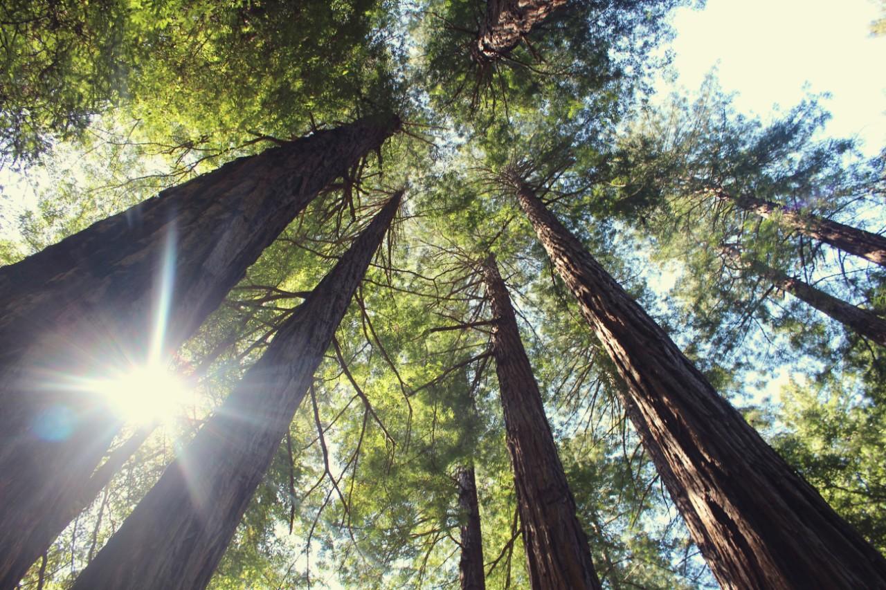 Cómo los árboles podrían salvar el clima del planeta