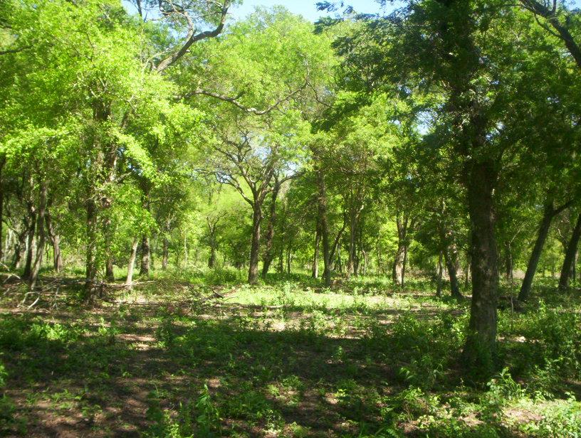 Presentan nuevo informe sobre situación de bosques nativos en Argentina