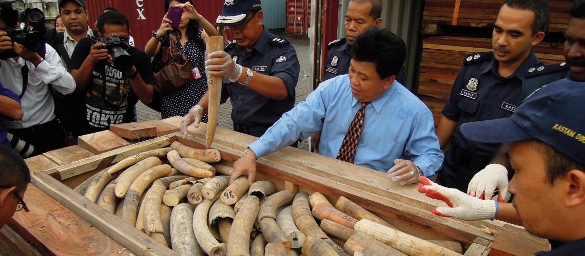 Los costos reales de la tala de árboles, la pesca y el comercio de vida silvestre ilegales llegan a entre USD 1 billón y USD 2 billones anuales.