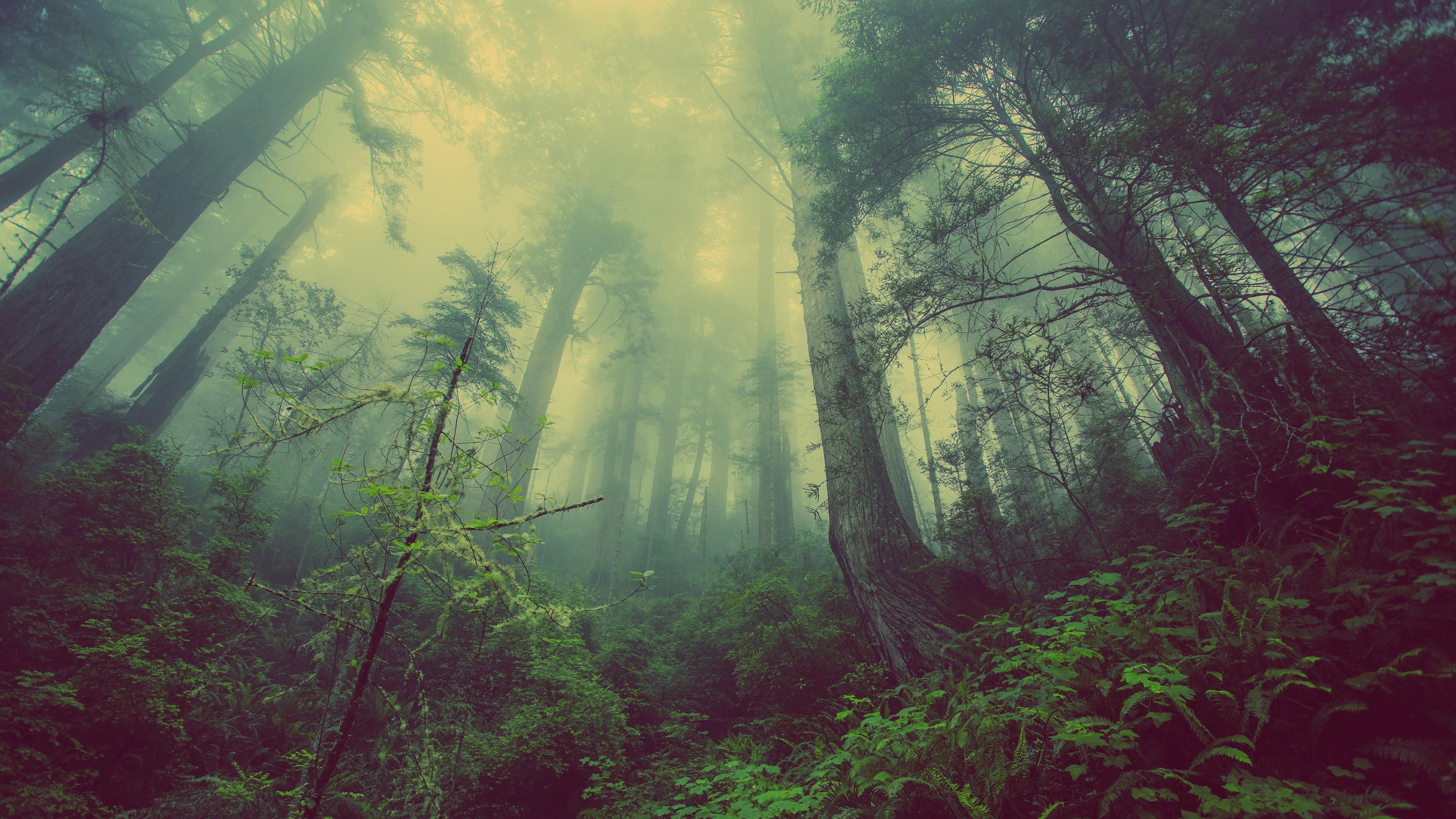 Los árboles luchan por su supervivencia cuando los bosques se vuelven pequeños