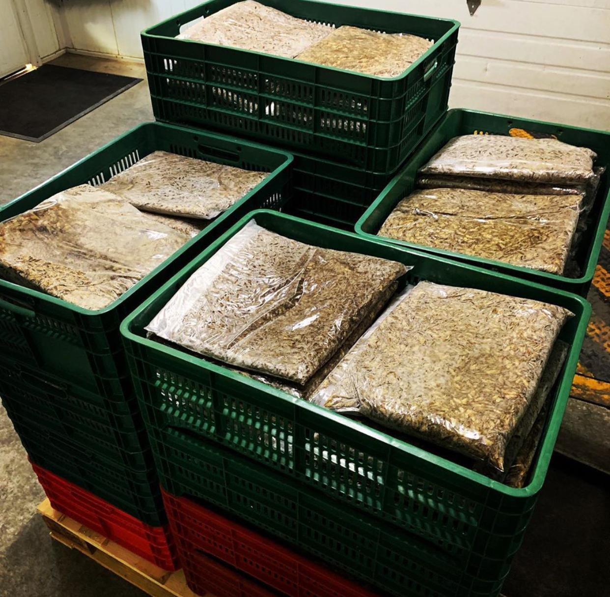 Harina de grillo el alimento del futuro: sostenible y nutritivo
