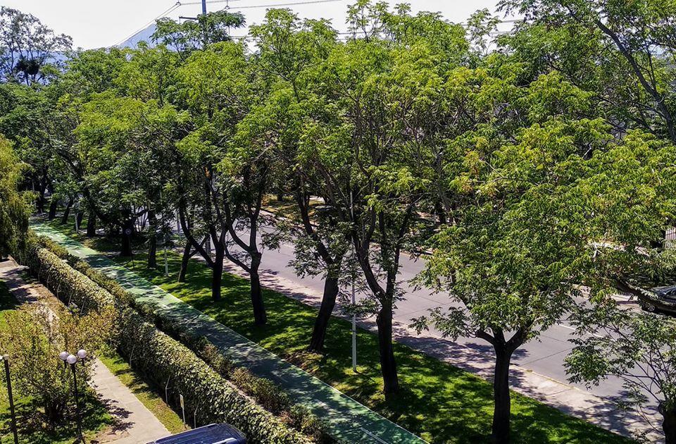 Ciudadanos luchan contra la deforestación urbana en las ciudades chilenas