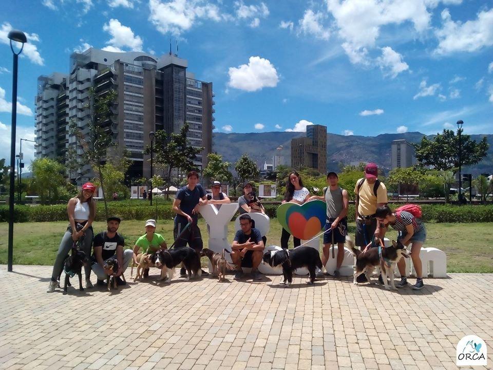 ORCA, una nueva oportunidad para las mascotas abandonadas en Medellín