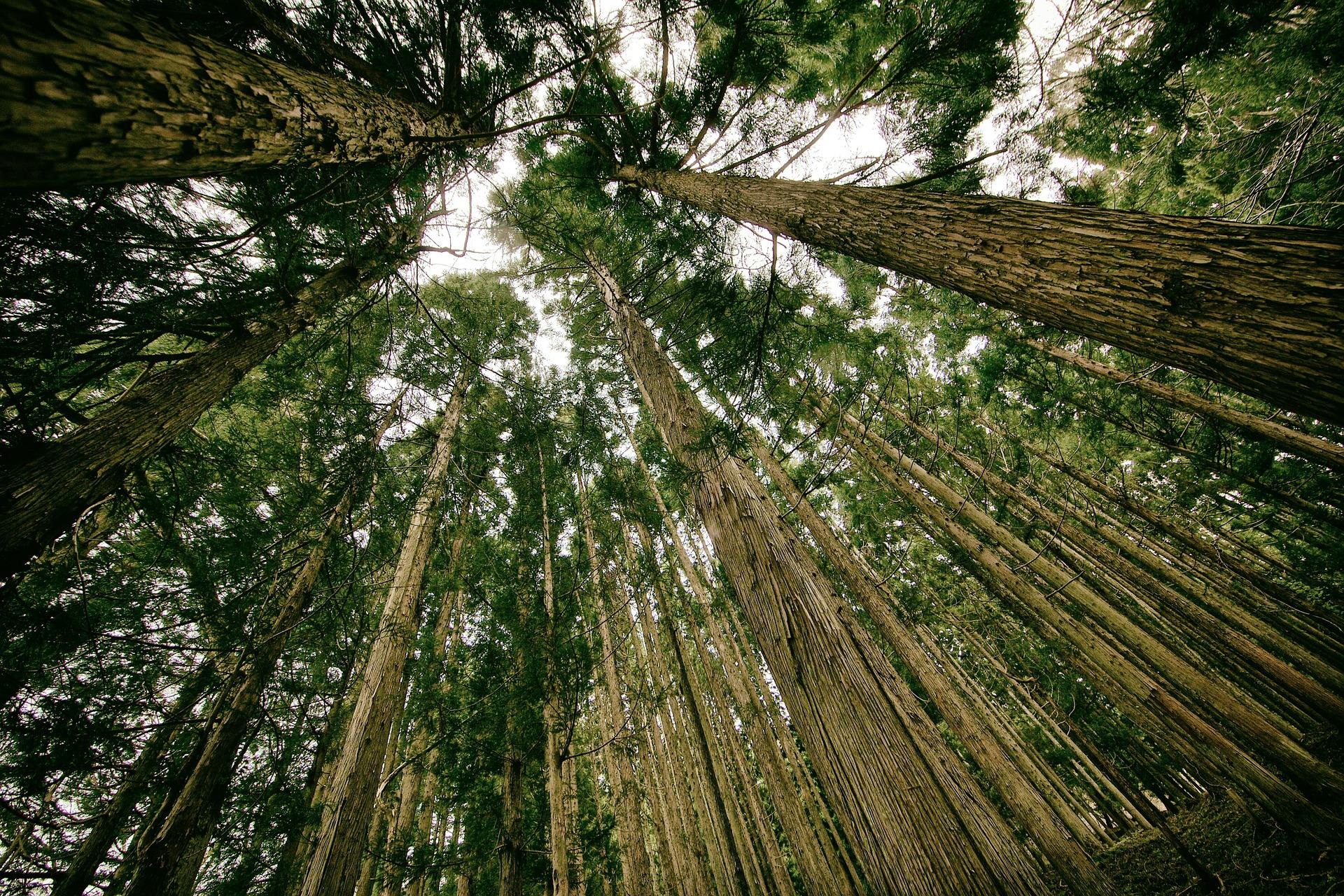 ¿Cómo pueden los bonos verdes ayudar a construir resiliencia después de COVID-19?