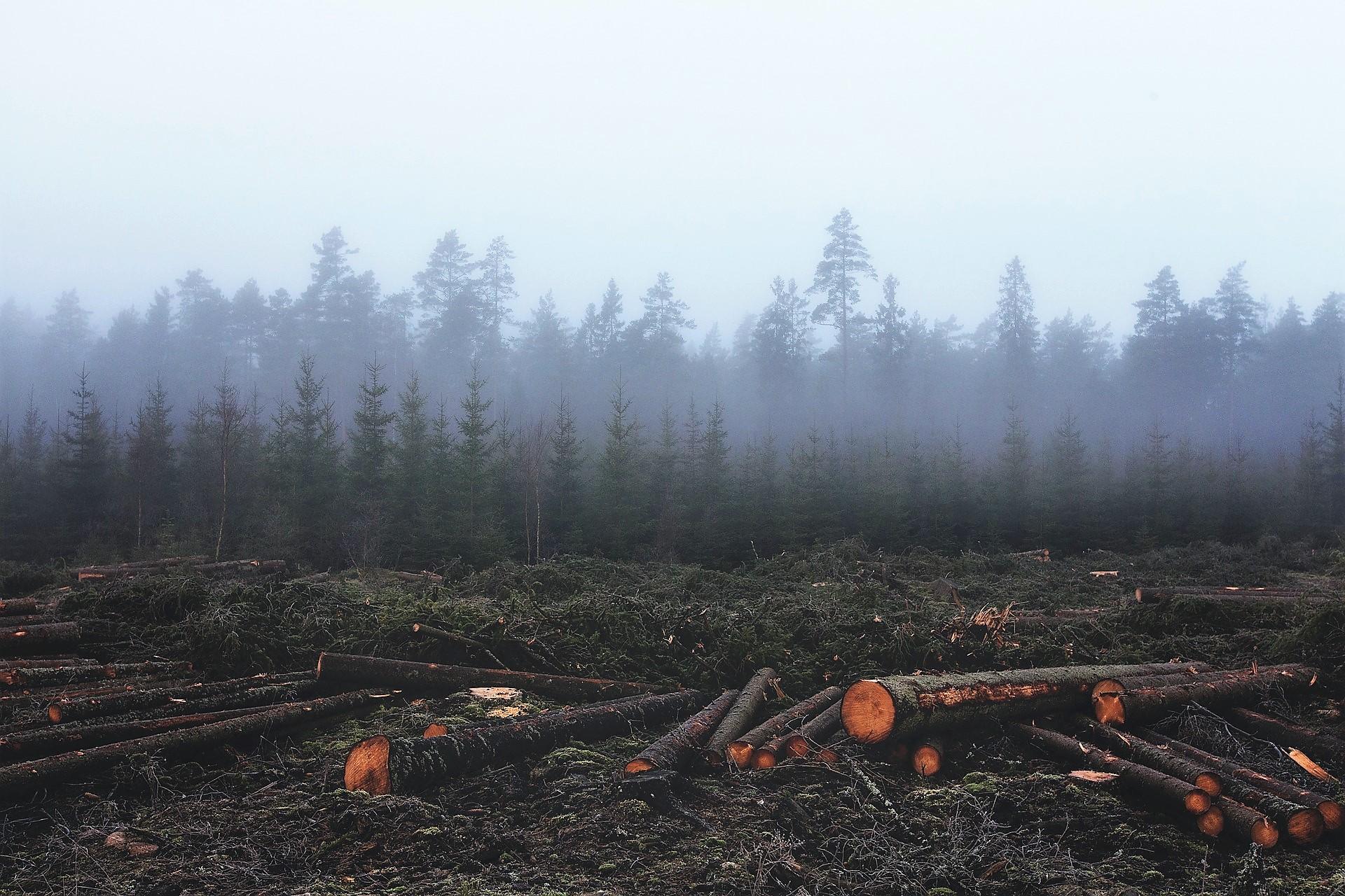 Humanos y deforestación: 90 % de probabilidades de destrucción de la civilización entre 20 y 40 años