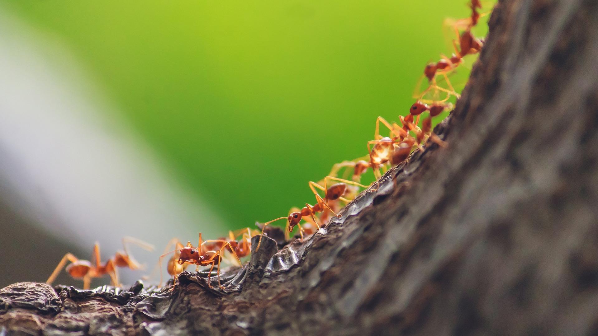 Increíble: Hormigas inspiran algoritmos que reducen en 50 % emisiones de gases en transporte