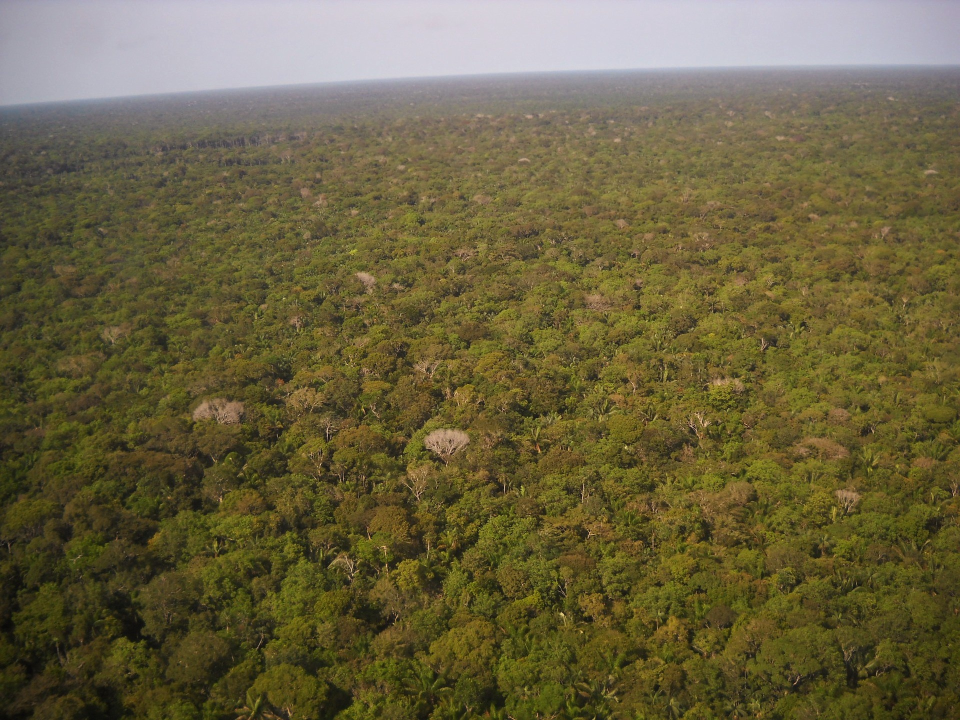 Panel Científico gesta modelo para salvar la Amazonia