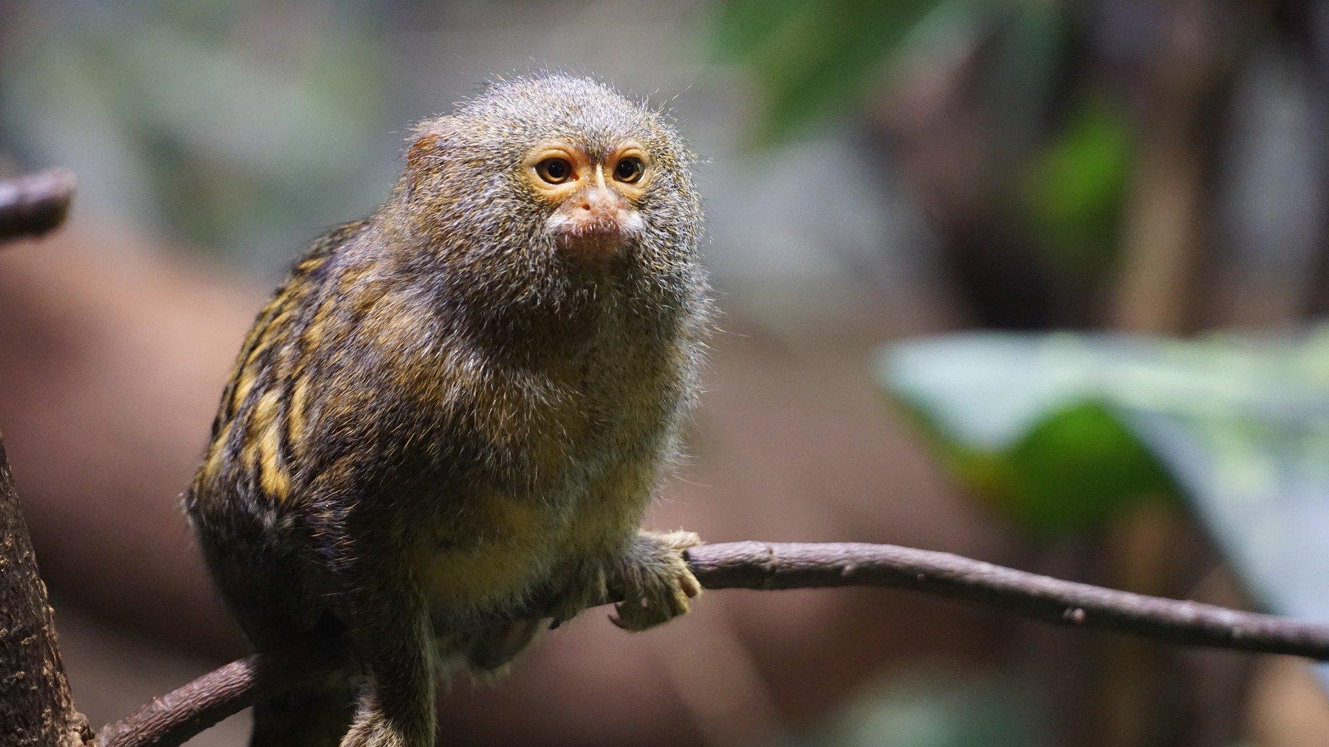 Latinoamérica: la región que más biodiversidad destruye en el mundo