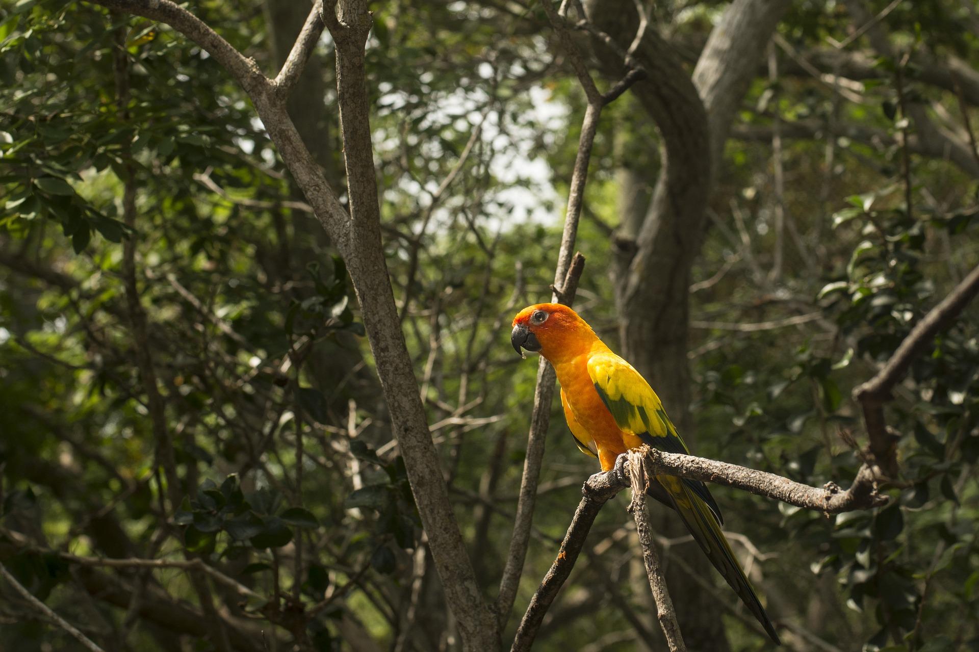 Más del 90 % de las áreas protegidas están desconectadas