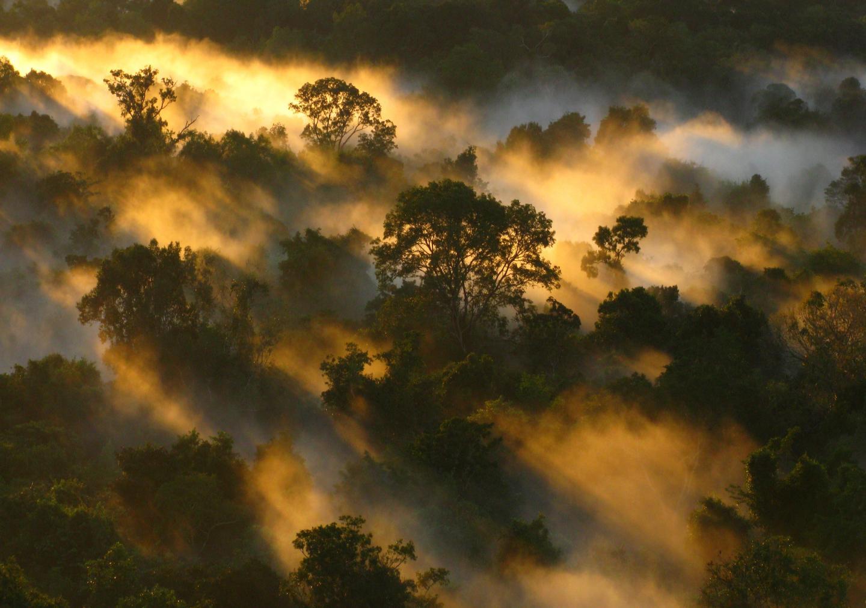Vegetación de América cambia por el calentamiento global