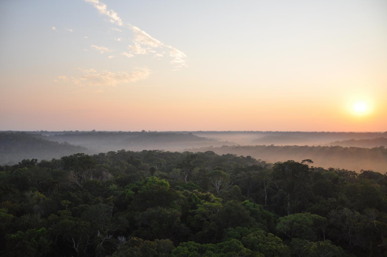 Algunas regiones de la selva amazónica son más resistentes al cambio climático de lo que se pensaba