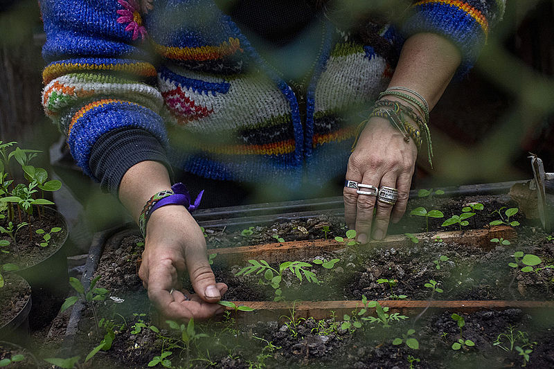 Agricultura urbana de Brasil, un modelo que se podría adaptar en Bogotá