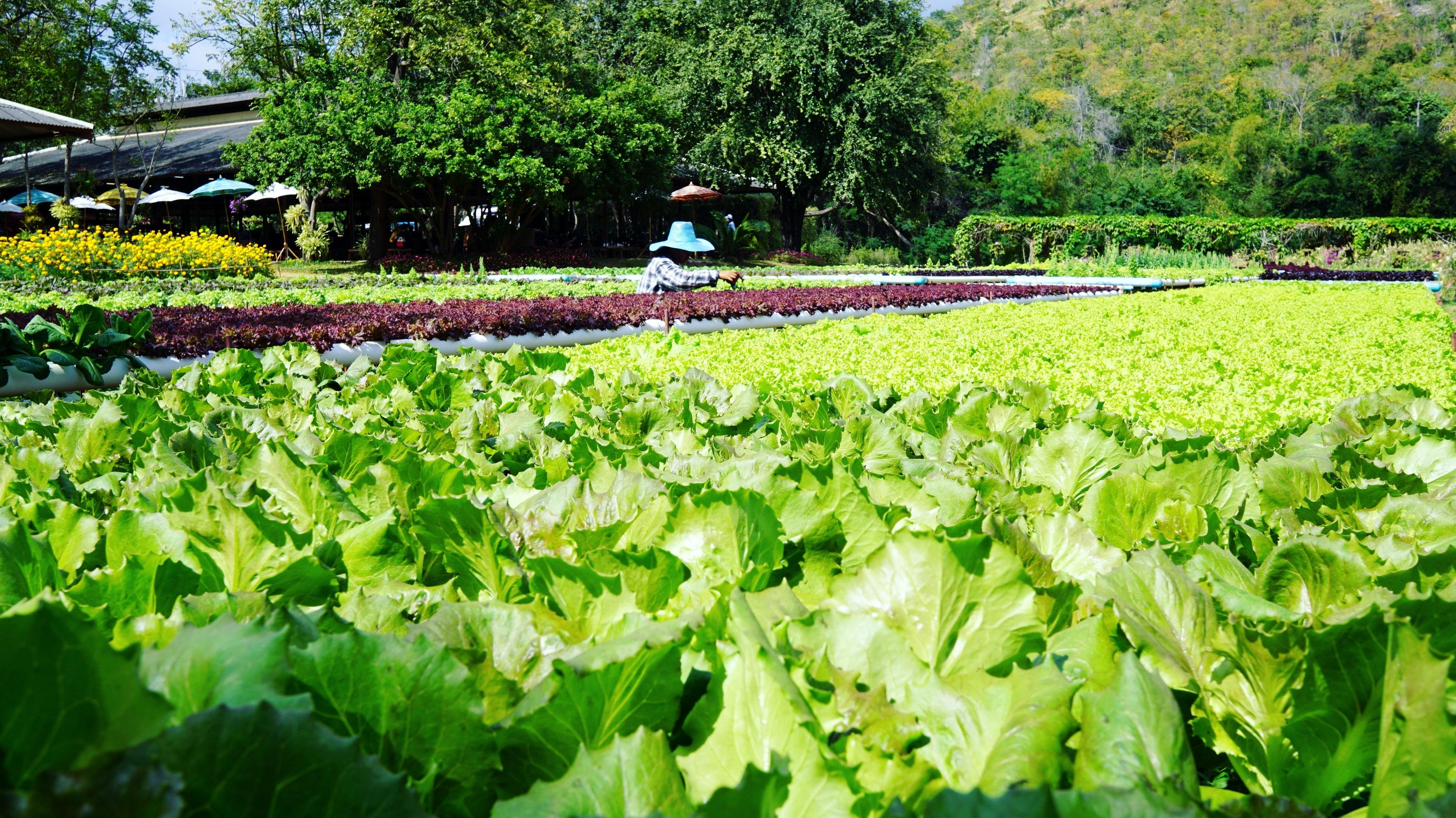 El cambio climático amenaza un tercio de la producción mundial de alimentos